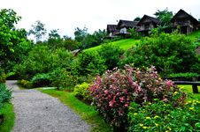 Free Nature At KhaoSok , Thailand Stock Photo - 17636430