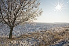 Free Snow On Trees In Winter Stock Photography - 17639002