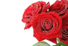 Free Rose Stock Images - 17639704