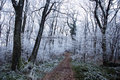 Free Forest Path In Winter Royalty Free Stock Images - 17640919