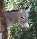 Free Portrait Of A Donkey Stock Images - 17643094