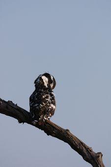Free Kingfisher Stock Photos - 17640723