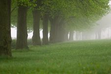 Free Park In The Fog Stock Image - 17640911