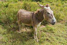 Free Tired Donkey Stock Images - 17642074