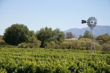Wine Vineyard With A Windmill Stock Photography
