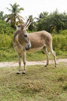 Free Donkey Turn Back Stock Photography - 17642312