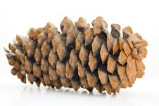 Large Pine Cone On White Stock Photos