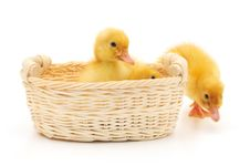 Free Ducklings In A Basket. Stock Photos - 17643273