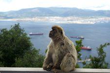 Free Sentinel Of Gibraltar Royalty Free Stock Image - 17643276