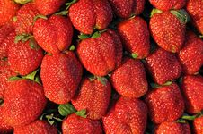Free Fresh Strawberry Royalty Free Stock Images - 17645329