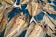 Free Dried Fish Royalty Free Stock Photos - 17645648