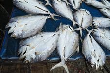 Free Dried Fish Stock Images - 17645784