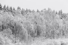 Free Winter Trees Royalty Free Stock Images - 17647319