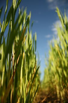 Free Grass Stock Photography - 17648282