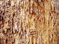 Free Wood Background Stock Photo - 17650670