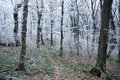 Free Forest Path In Winter Stock Photo - 17655530