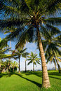 Free Tropical Landscape Royalty Free Stock Photography - 17658077