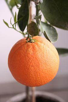 Free Orange Background Royalty Free Stock Photo - 17650525