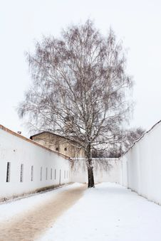 Free Lonely Tree In The Old Russian Monastery In Suzdal Royalty Free Stock Image - 17653556