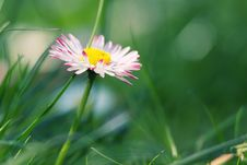 Free Spring Stock Photography - 17653932