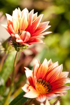 Free Spring Flower Stock Photos - 17654373