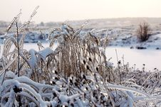 Free Frozen Nature Royalty Free Stock Photos - 17656658