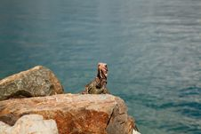 Free Iguana In The Caribbean Stock Photos - 17657453