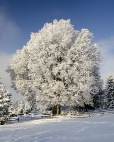 Free Snow Tree Under Blue Sky Stock Images - 17658644