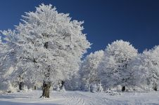 Free Snow Tree Under Blue Sky Stock Photo - 17658800