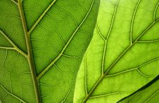 Free Leaf Closeup Royalty Free Stock Photos - 17659068