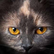 Free Cat Eyes. Stock Image - 17659761