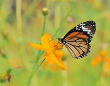 Free Butterfly Landing On The Flower Royalty Free Stock Image - 17659936
