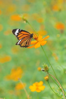 Free Butterfly Landing On Flower Royalty Free Stock Photos - 17659938