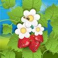 Free Strawberry Stock Photography - 17669792