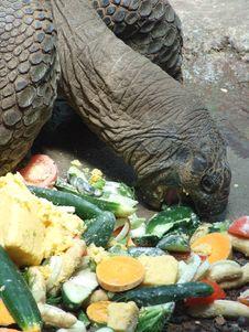 Free Giant Animal Stock Images - 17660424