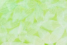 Free Leaf Background Stock Images - 17664264