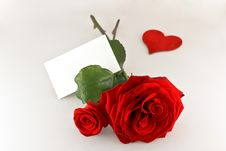 Free Two Rose With One Card Stock Photo - 17665180