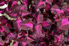 Ornamental Plants Warm Royalty Free Stock Photo