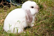 Free Rabbit Royalty Free Stock Photo - 17666265