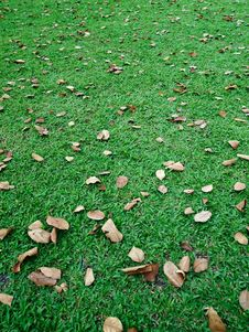 Free Fall Leaves On Green Lawn Royalty Free Stock Image - 17666466