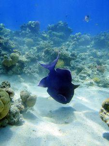 Free Big Blue Fish Stock Photography - 17666842