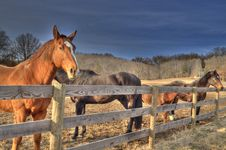 Fenced Horses Stock Photos