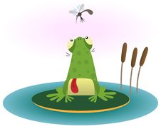 Free Frog And Gnat Royalty Free Stock Photo - 17669155