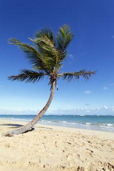 Free Palm Stock Image - 17669811