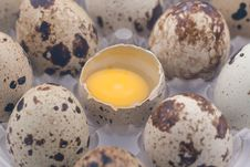 Free Quail Eggs Pack Royalty Free Stock Photography - 17669817