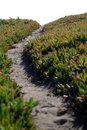 Free Ice Plant Field With Dirt Pathway Stock Photos - 17670443