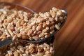 Free Hybrid Wheat Seeds Closeup Royalty Free Stock Photo - 17671275