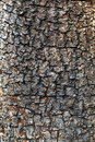 Free Close Up Tree Bark Royalty Free Stock Images - 17673169
