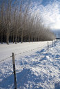 Free Sunny Winter S Day On The Prairie. Stock Photos - 17676363