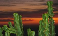 Free Cacti During Sunset Royalty Free Stock Photos - 17670228